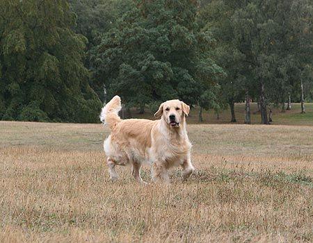 Nuestros perros jugando