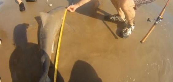 Woman fishing on California beach reels in two sharks