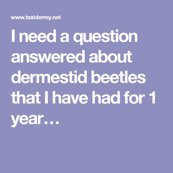 I need a question answered about dermestid beetles that I have had for 1 year…