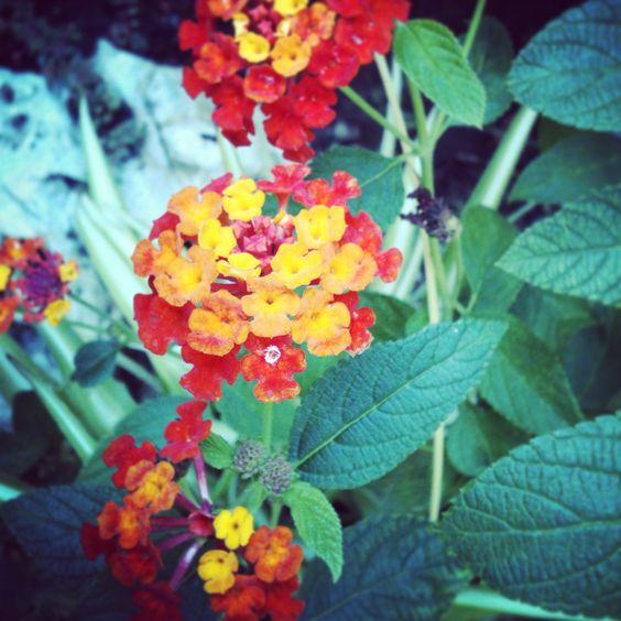 Fiorellini da giardino