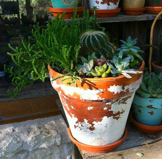 Terracotta Pot Cactus/Succulent