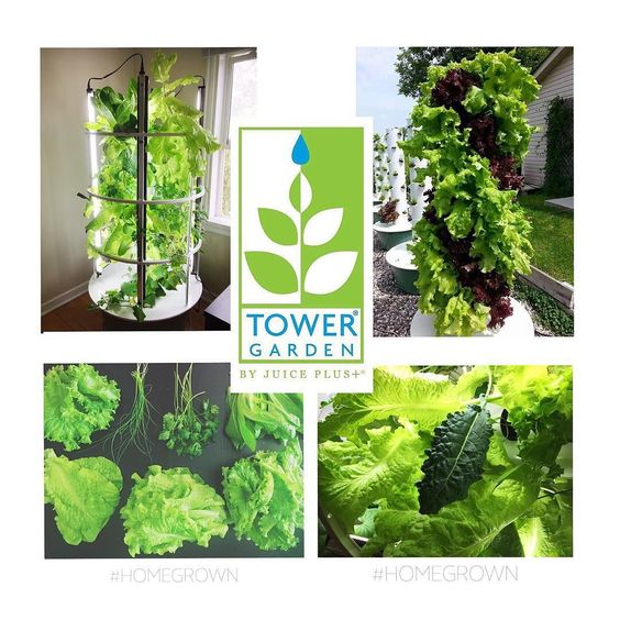 I am so pleased to announce that my favourite studio @yogabeyond_yyc is now carrying the Tower Garden by Juice Plus! We look forward to sharing our efforts and engaging the community to reduce energy and waste garden sustainably support local agriculture and much more.  #FoodForTheSoul #FutureGrowing #VerticalFarming #InspiringHealthyLiving #Homegrown #Fresh365 #YogaAndBeyond #yyc #yycyoga #YogaBeyond_yyc  www.yogaandbeyond.ca http://ift.tt/1Gar87v by teemussell