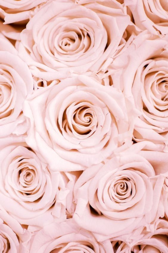 Spring Wallpapers 35 Free Hd Download Spring Wallpaper Wallpapers In 2021 Rose Gold Wallpaper Wallpaper Iphone Roses Rose Wallpaper Beautiful rose gold roses wallpaper for