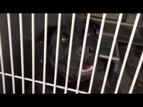Sweetheart NEEDS AFFORD - Dog returned to shelter a week after being adopted... Resident dog didn't like him.
