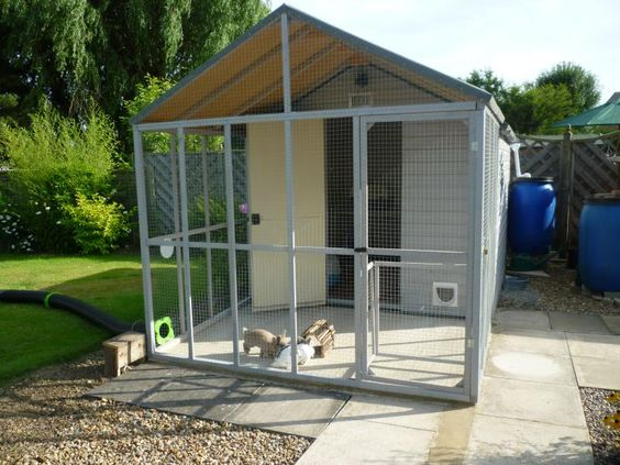 Shed aviary run combo with tunnel to grass run farm for Dog kennel shed combo plans