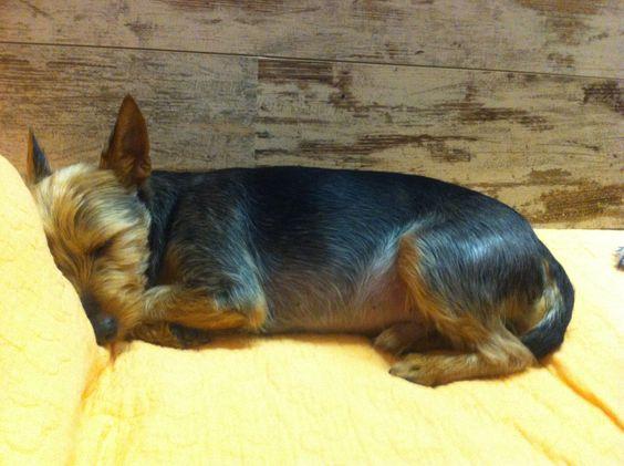 #little #sweety #dog