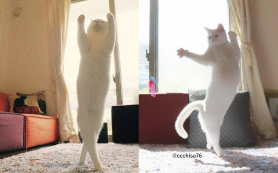 Ballet Cat takes internet by storm with amazing 'dance' photos: