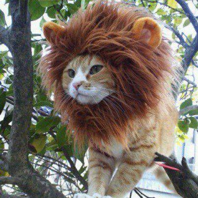 Cat - Lion