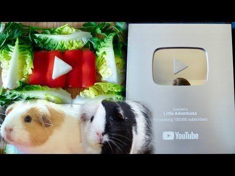 Pin Auf Guinea Pigs
