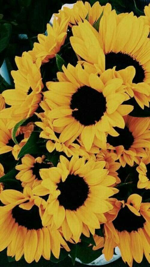 Lockscreen Flowers In 2019 Sunflower Wallpaper Flower