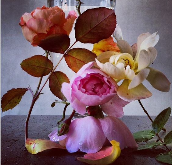 Roses from my garden by Nick               Knight via Instagram.