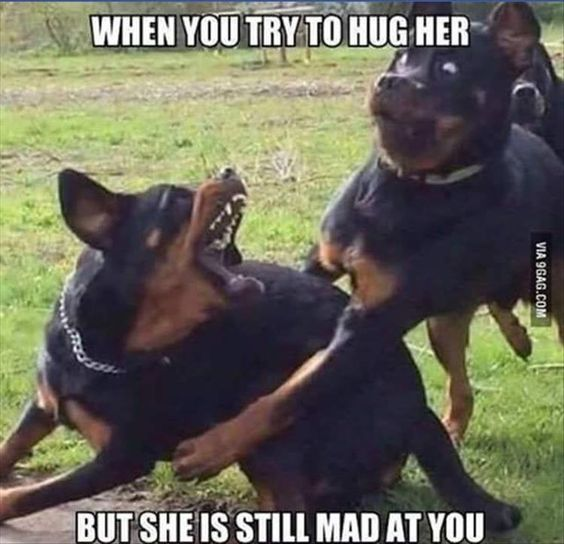 quando você tentar abraçá-la, mas ela ainda está brava com você: