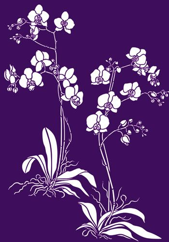 Orchids, Stencils and Moth on Pinterest
