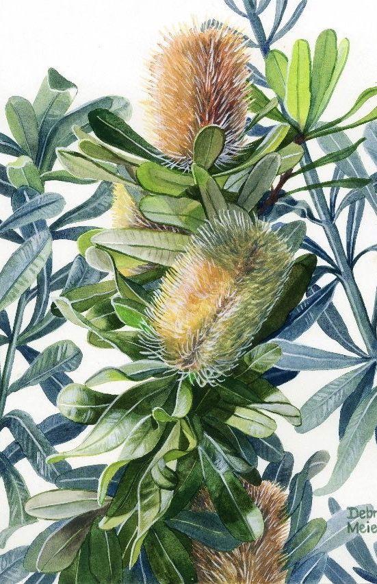 Three Banksias Australian Native Flower Banksia Flower Art Native Flower Art In 2020 Australian Native Flowers Love Painting My Art Studio