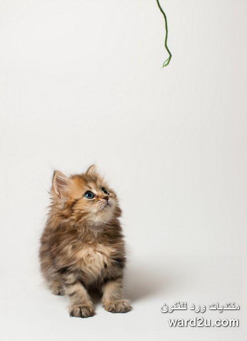 صور قطط باقة مختارة من أروع و أجمل القطط مع خلفيات Hd Cartoon Wallpaper Hd Animals Cartoon Wallpaper