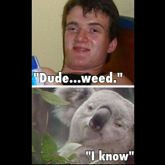 high koala meme - photo #6