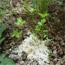 El uso de cenizas en la Agricultura Ecológica ecoagricultor.com