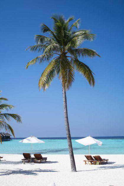 Condor Cocos Cookies auf den Malediven oder der paradiesischste Weihnachts-Backen E V E R