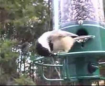 how to stop squirrels from climbing bird feeder pole