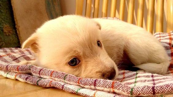 Laissez-moi dormir – Photo mignonne du jour par Meet Dagar.