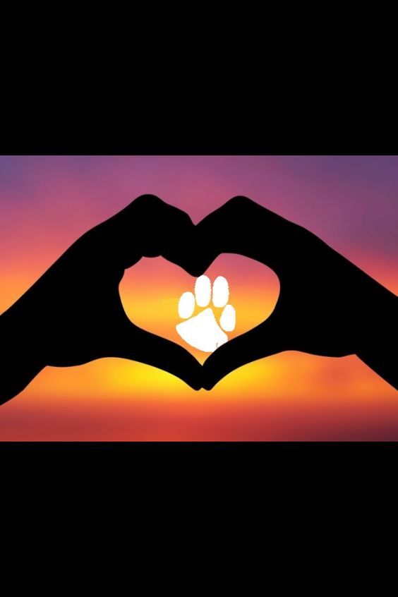 I love Clemson!!! They are my favorite football team (even though I don't watch football)!!