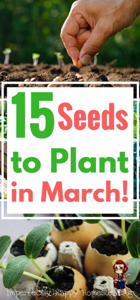 15 Vegetable Herb And Fruit Seeds You Can Plant In March 640 x 480