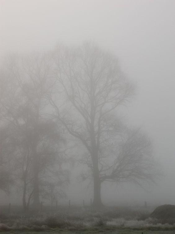 ...Nebel hat den Wald verschlungen, der dein stillstes Glück gesehn; ganz in Duft und Dämmerungen will die schöne Welt vergehn. Nur noch einmal bricht die Sonne unaufhaltsam durch den Duft, und ein Strahl der alten Wonne rieselt über Tal und Kluft...... (Theodor Storm)