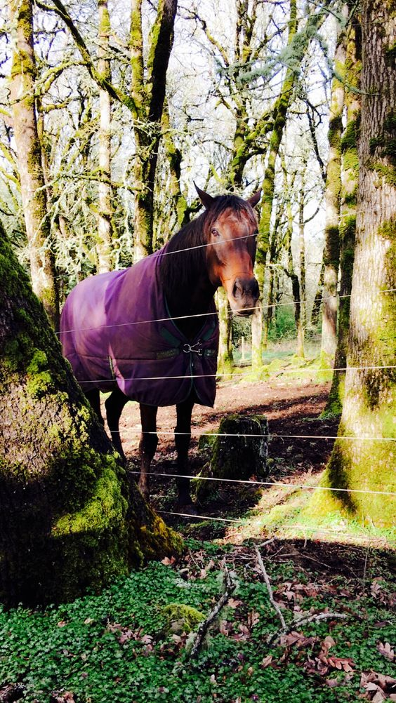 Most handsome Whiskey the Thoroughbred