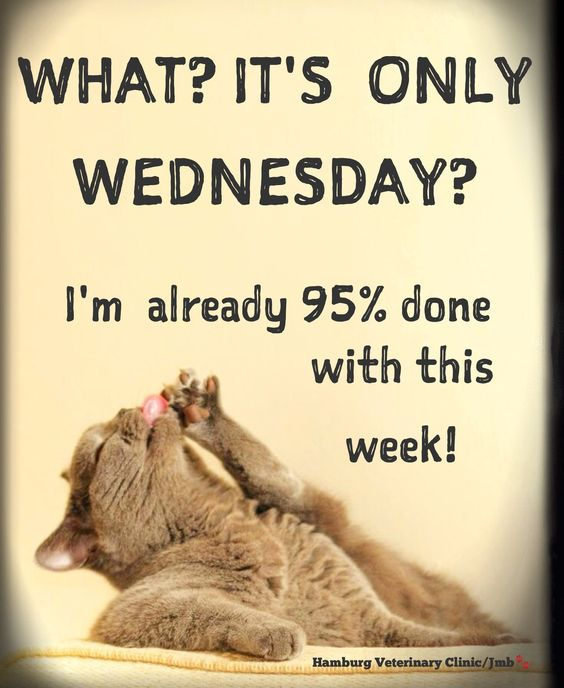 Wednesday Humor - Happy Hump Day! 🐪 Mid week: Halfway there! Animal Cute: What? It's only Wednesday? I'm already 95% done with this week! Hang in there!