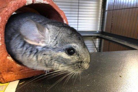 Rehome A Pet Pets Pet Home Furry