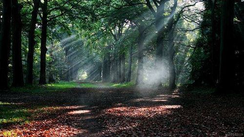 Photo Nature Gif Nature Beautiful Forest