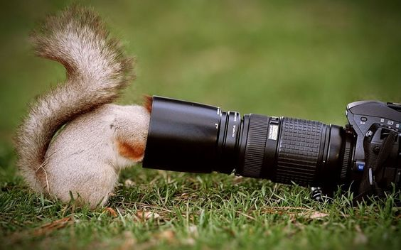 Beautiful squirrels Animals and Camera