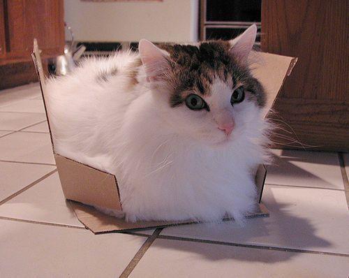 Schrodinger S Cat What Is It What Does It Mean Cat Traps Cat Box Schrodingers Cat