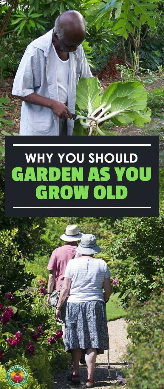 9211411f3be038cfe92a78b37fba1647 - Benefits Of Gardening For The Elderly