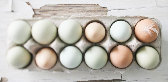 eggs: Fresh Eggs, Real Eggs, Chickens Eggs, Easter Eggs, Chicken Feathers, Egg Colors, Pastel Eggs, Blog Pastels
