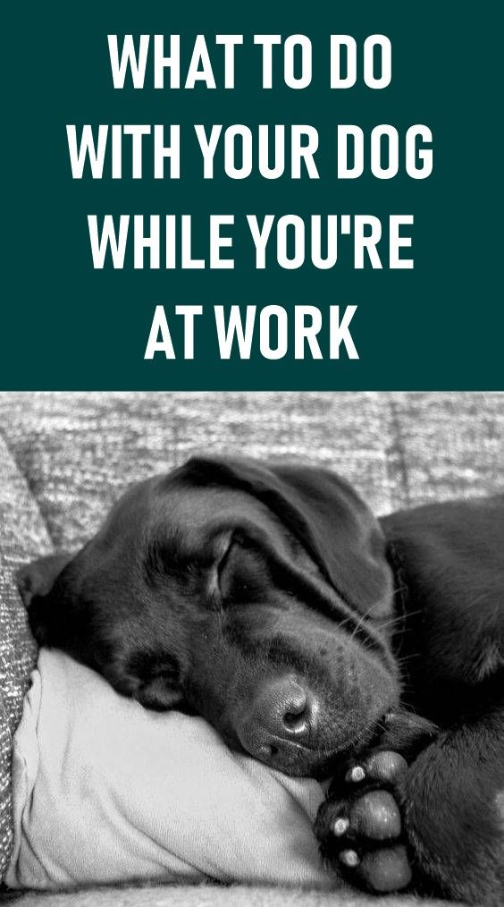 Leaving A Dog Home Alone Is Difficult But Most Of Us Work Full