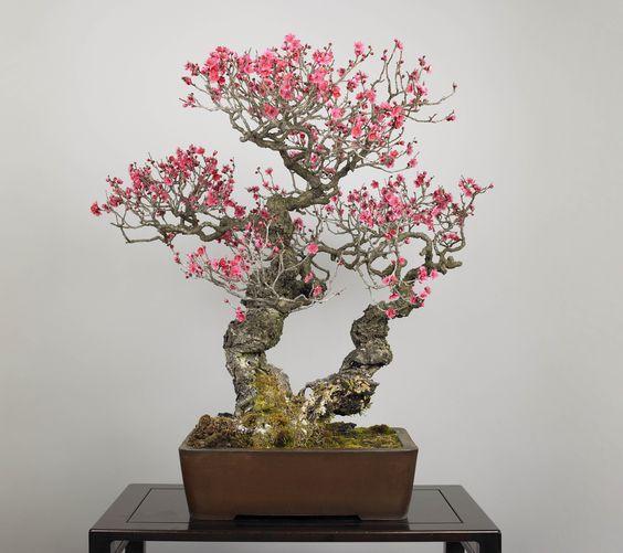 盆栽美術館 - Google 検索