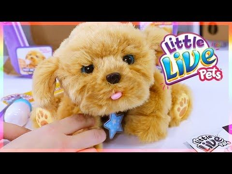 Little Live Pet Snuggles Opens An Entire Case Of Puppy In My Pocket Toys Youtube Little Live Pets Snuggles Pets