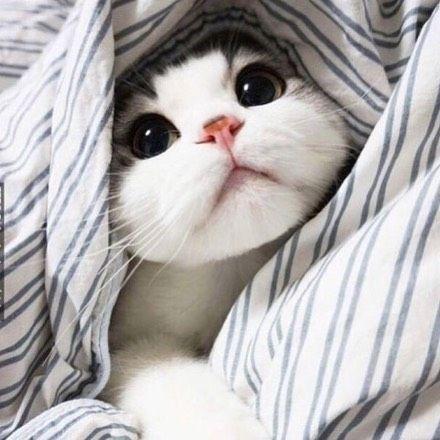 gotos de gatinhos fofos