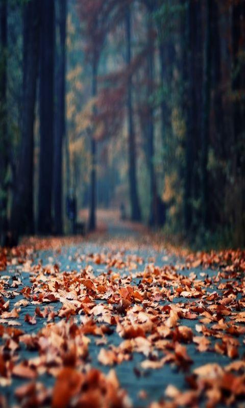 Autumn Path - Iphone 5s Wallpaper