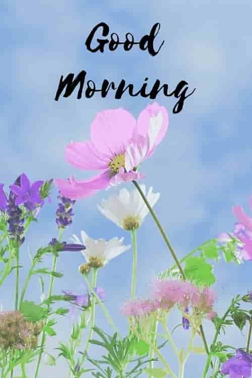 Best Good Morning Hd Images Wishes Pictures And Greetings In 2020 Good Morning Images Good Morning Images Hd Good Morning Flowers Pictures