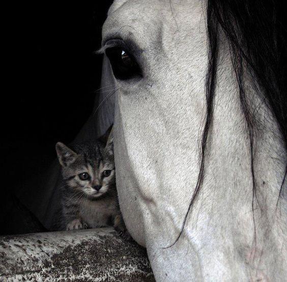 Horse / Secret Love