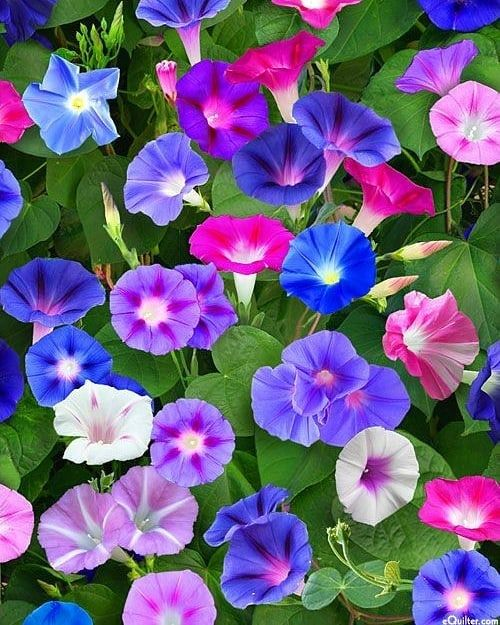 Cok Guzeller Tasarimfikirler Youtube Instagram Pinterest Alinti Diy Kendinya Morning Glory Flowers Beautiful Flowers Flowers Nature