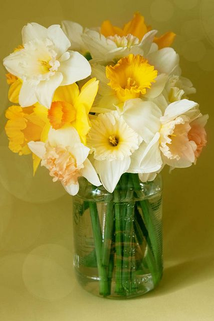 The smell of daffodils always takes me back to my childhood. They will always be my favorite flower.: