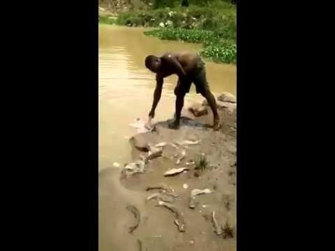 Este es el famosos El pez Gato, el que está acabando con los demás peces...