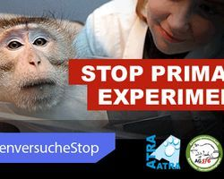 Stoppt Primatenversuche in Zürich und weltweit! // Stop primate experiments in Zürich and... (6588 signatures on petition)