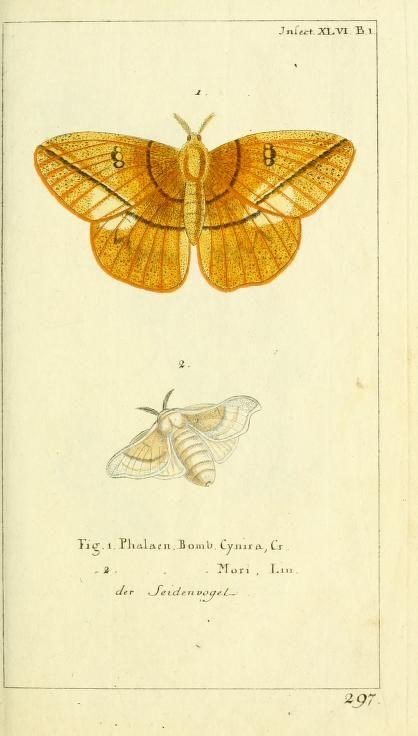 Gemeinnüzzige Naturgeschichte des Thierreichs, Georg Heinrich Borowski, 1780-89.