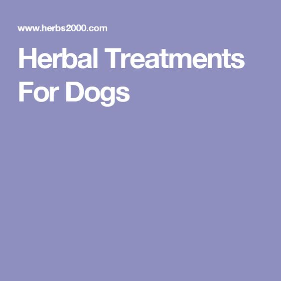 Herbal Treatments For Dogs