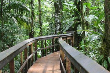 2-Day Cinco Ceibas Rainforest Tour from San Jose #costarica #tour #hiking
