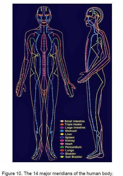 De 14 belangrijkste meridianen van de mens